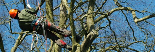 tree-service-624x212