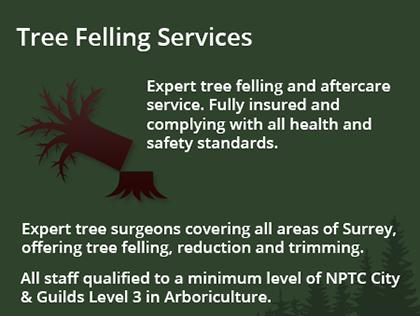 tree-felling-info